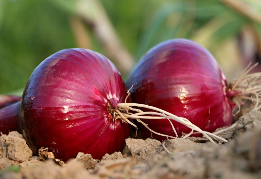 horticola-vegetal-outubro